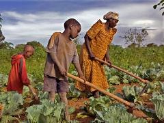 Le Tchad promet d'éradiquer la famine en 2015 dans ACTUALITES arton207723