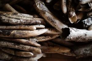 Tchad: une tonne d'ivoire détruite dans le parc national de Zakouma dans ACTUALITES d5fee23d570d49c33f328a608e43a5c2e1578e27-300x199
