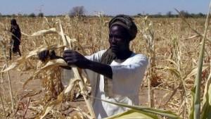 Le Tchad s'affiche au Salon de l'agriculture dans ACTUALITES tchad_0-300x169